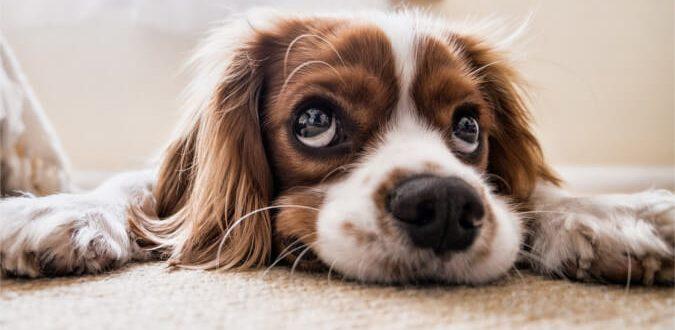 Zwierzęta w domu - jak utrzymać porządek?