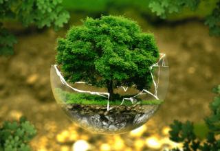Jak dbać o środowisko?