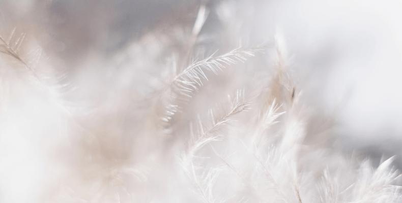 Wypełnienie kurtki - puch naturalny