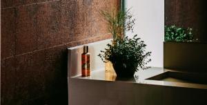 Rośliny łazienkowe - ciemna łazienka