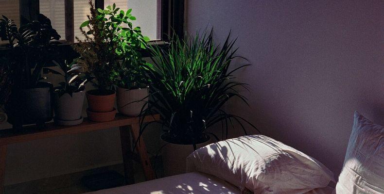 Zdrowe kwiaty do sypialni