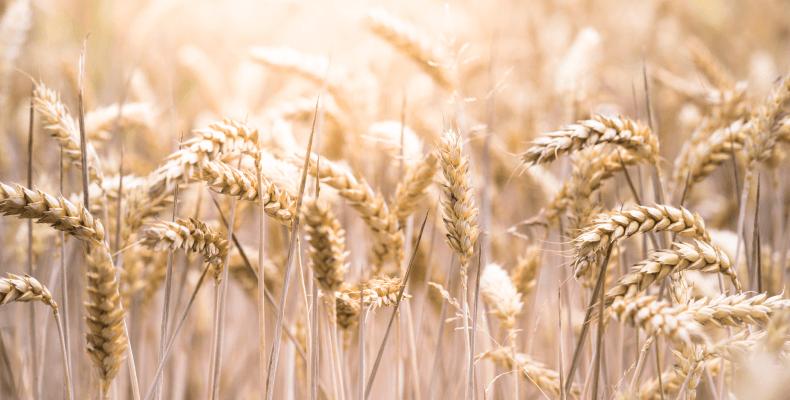 Program azotanowy - wpływ na uprawę roślin