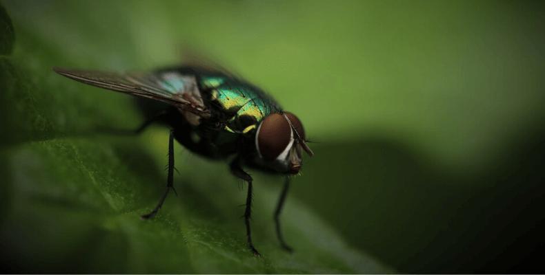 Sposób na muchy w domu