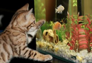 jak czyścić akwarium