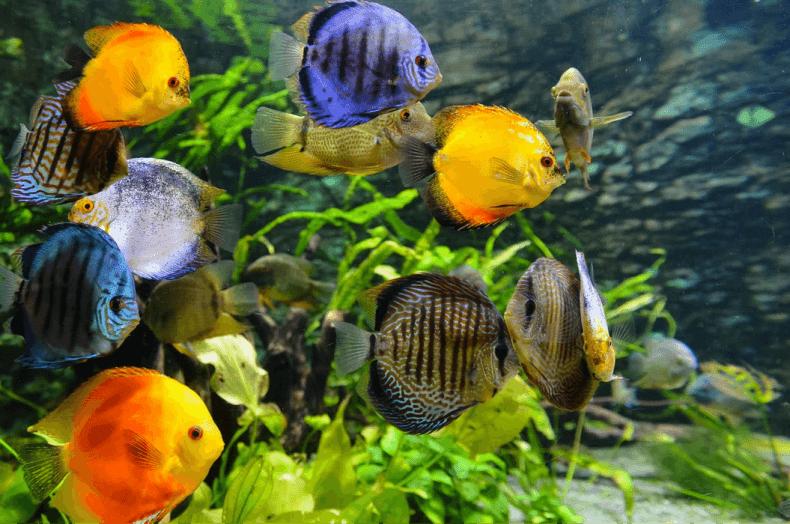 jak czyścić dno akwarium